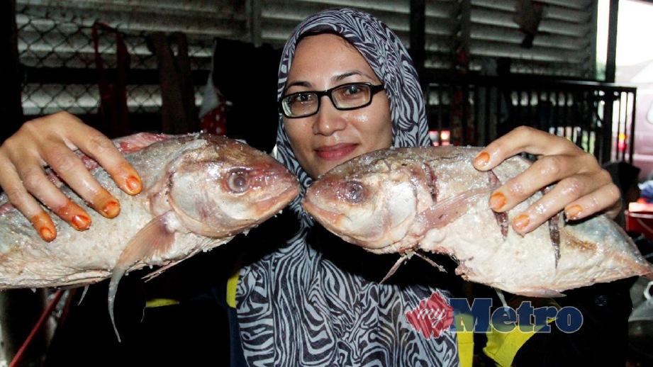 ikan budu jadi rebutan harian metro Resepi Gulai Ikan Gelama Enak dan Mudah