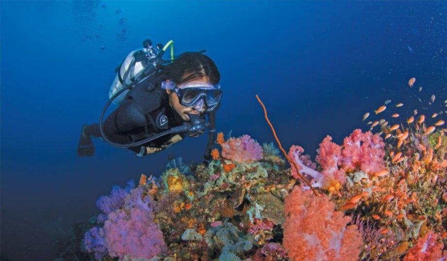 930 Lukisan Pemandangan Dasar Laut Yang Indah Terbaik