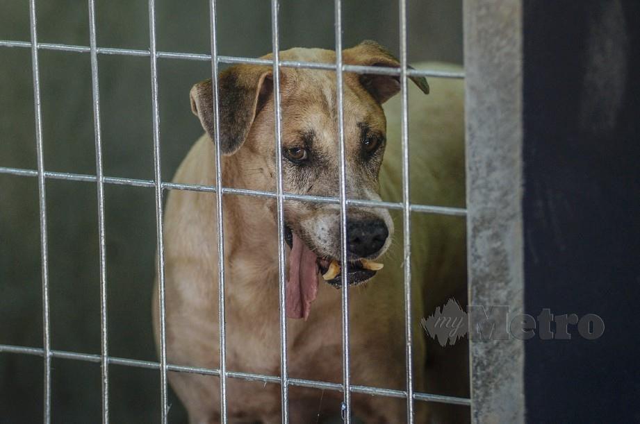 Isu Anjing Liar Utamakan Keselamatan Awam Harian Metro