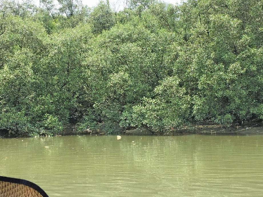 TARIKAN baharu hutan bakau apabila lengkap dibina dijangka pada 2021. FOTO Ihsan Selangor Maritime Gateway