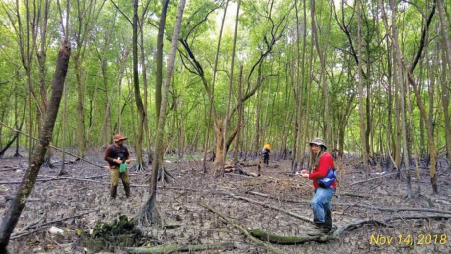 KETIKA proses kajian sebelum pembinaan dilakukan arboris dan renjer hutan. FOTO Ihsan Selangor Maritime Gateway