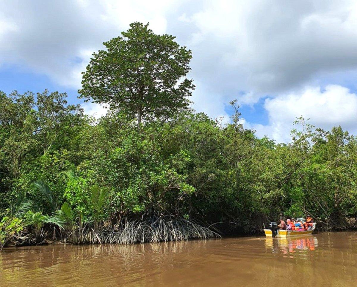 HABITAT bakau penting kerana penyerap karbon terbaik selain habitat ikan.