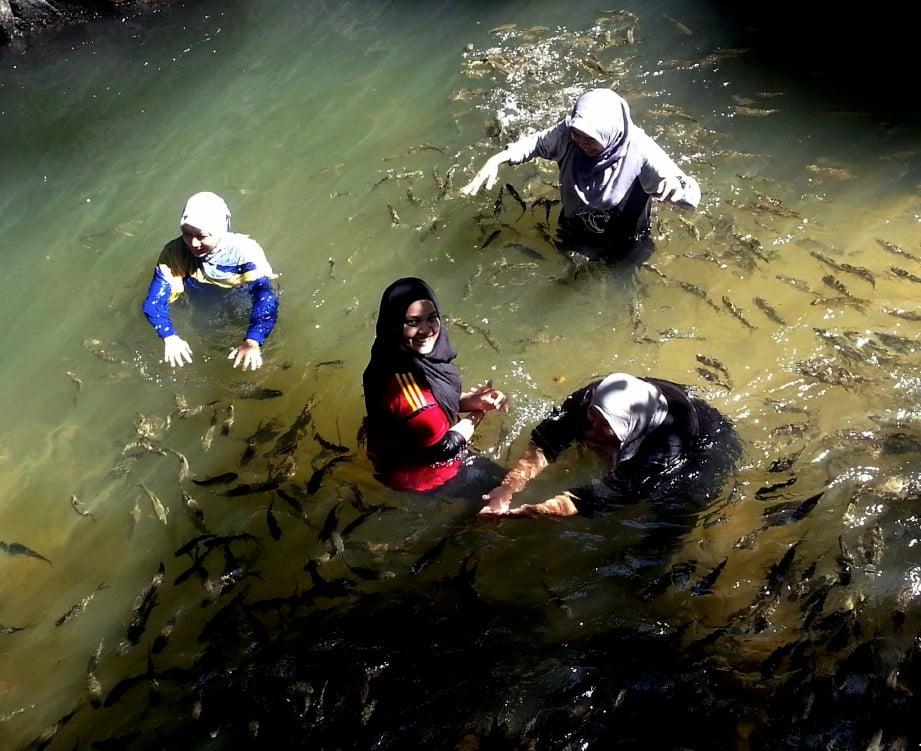PENGUNJUNG boleh 'bermanja' dengan ikan kelah di Santuari Ikan Sungai Chiling.