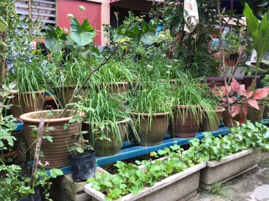ANTARA tanaman yang sesuai ditanam.