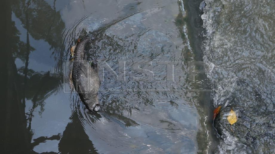 KEADAAN Sungai Kim Kim, Pasir Gudang yang dipenuhi tompokan hitam dipercayai sisa bahan kimia berbahaya yang dibuang secara haram pada awal pagi Khamis lalu. FOTO Mohd Azren Jamaludin