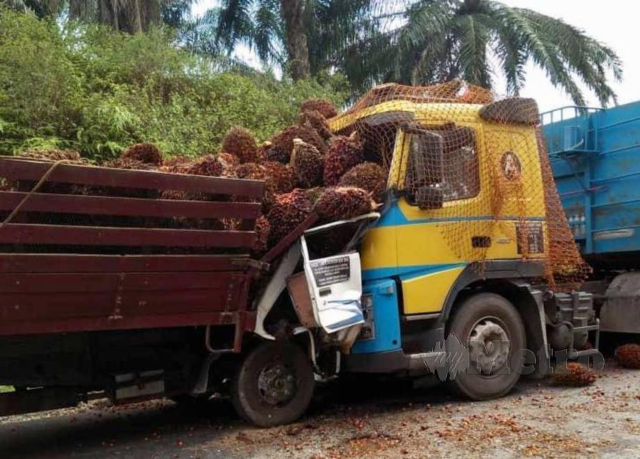 LORI membawa muatan sawit bertembung dengan treler membawa muatan bijih besi, mengorbankan seorang pemandu dan seorang parah di Jalan Gua Musang - Kuala Berang. FOTO Ramli Ibrahim