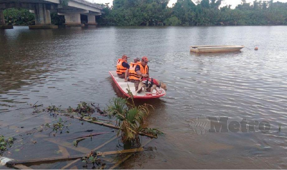 ANJING Pengesan Unit K9 JBPM Jalan Kelang Lama melakukan operasi SAR mangsa lemas di Sungai Terengganu dekat Kampung Seberang Tuan Chik yang memasuki hari kedua. FOTO Zaid Salim