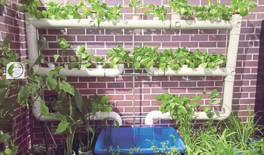 KAEDAH penanaman Nutripot untuk pokok sayuran yang lebih besar seperti tomato.