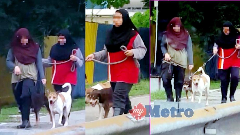 GELAGAT tiga gadis didakwa membawa anjing 'bersiar-siar' yang tular di media sosial sejak kelmarin.