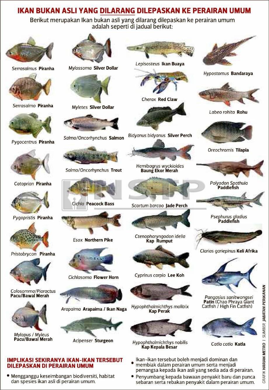 Bahaya Lepas Ikan Larangan Harian Metro
