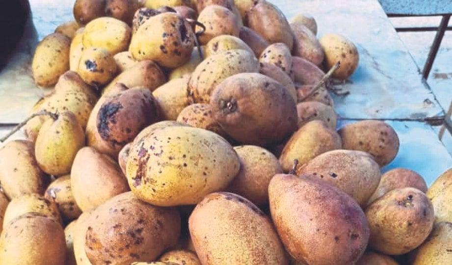 BUAH binjai mengandungi vitamin C.
