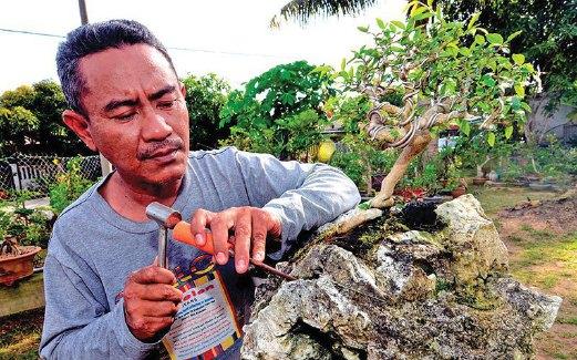 KAMAL Bahri membentuk ukiran pada batu yang ditanam dengan pokok bonsai.