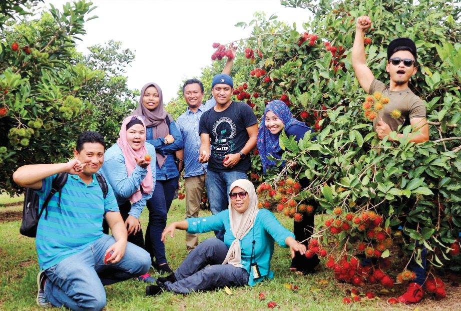 WARGA media Kedah turut berpeluang memetik buah rambutan klon baru.