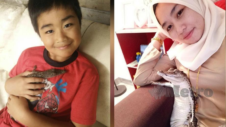 1.BUAYA tembaga betina diberi nama Adik dipelihara Firdaus Fitri sejak kecil. (Gambar kanan) Siti Nor Asikin bergambar dengan Adik.