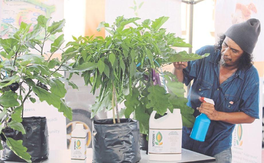 SUHAIME menunjukkan cara penggunaan kitosan yang mudah terhadap semua jenis tanaman termasuk sayuran.