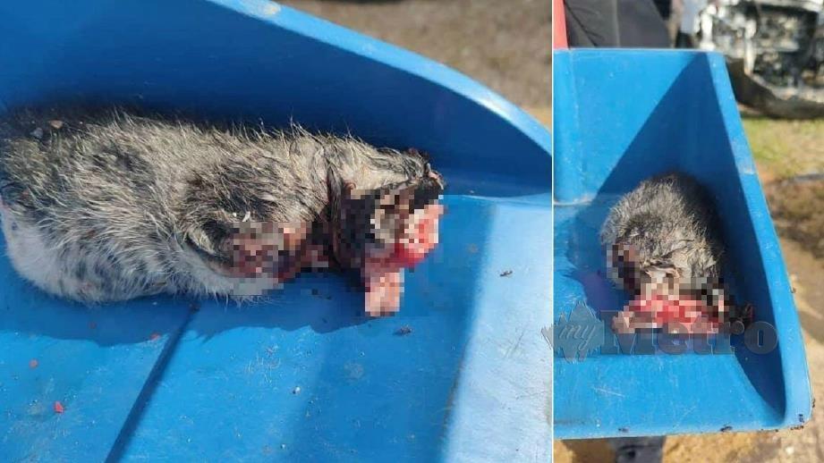 BANGKAI kucing yang  dibunuh kejam ditemui di sebuah bengkel. FOTO Ihsan Animal Malaysia