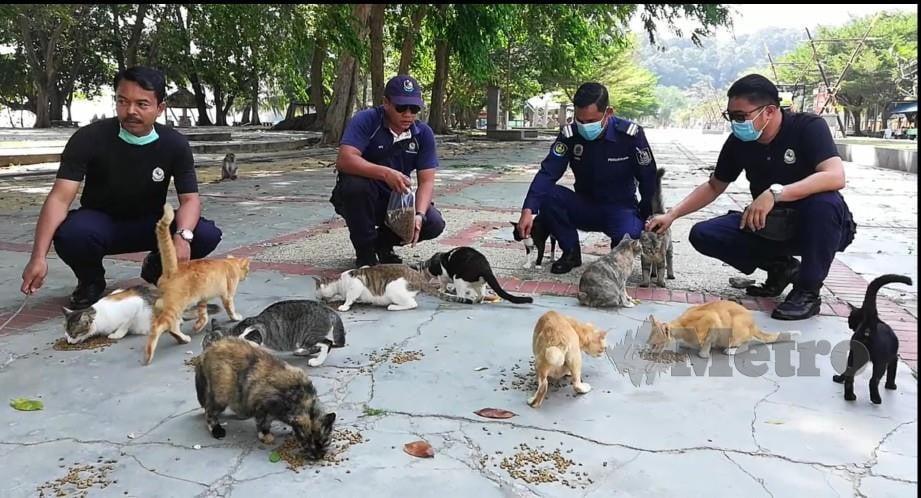 EMPAT anggota penguatkuasa Majlis Perbandaran Manjung (MPM) 'mencuri' masa untuk memberi makan kepada lebih 20 haiwan terbiar itu di Teluk Batik, Lumut sejak bulan lalu. FOTO NOOR HIDAYAH TANZIZI.