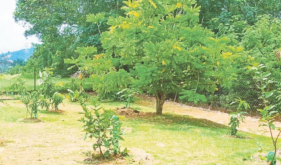 KAWASAN dusun SK Taman Paroi Jaya.