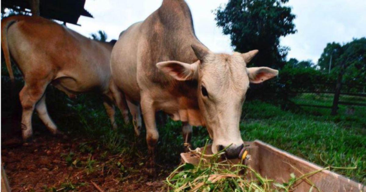 India haramkan sembelih semua jenis haiwan di Kashmir ketika Aidiladha