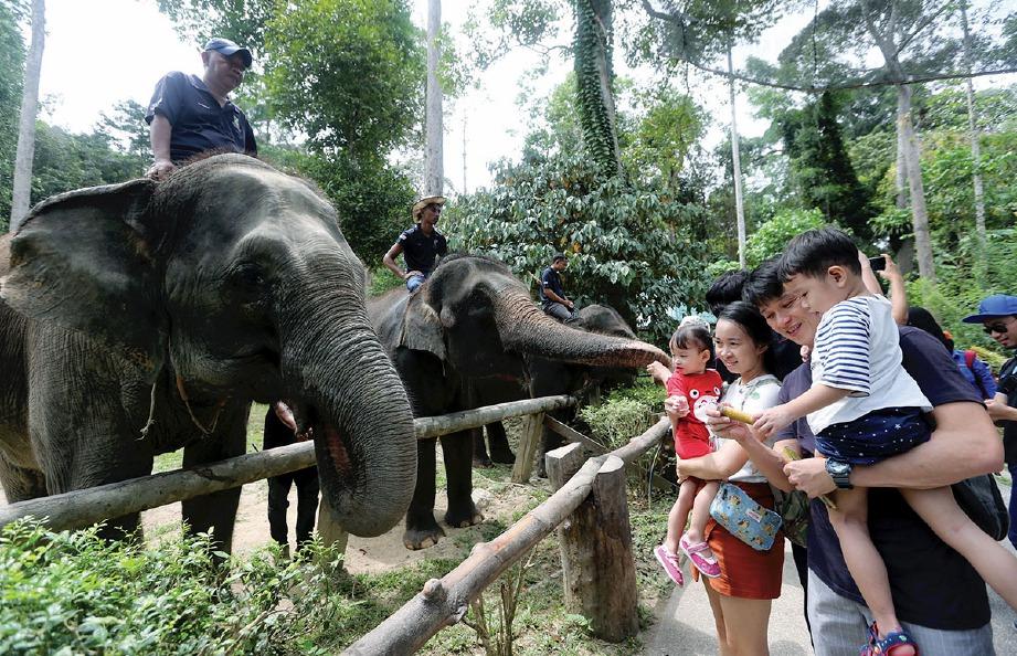 GELAGAT pengunjung ketika interaksi bersama gajah. FOTO Rohanis Shukri