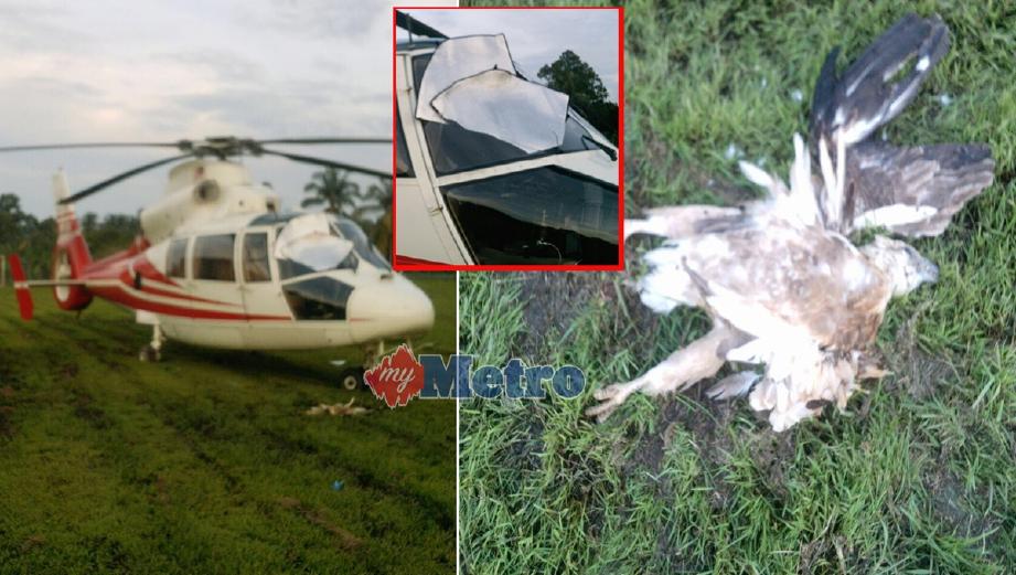 Helang hampir buatkan helikopter terhempas di Port Dickson