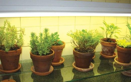 TANAMAN herba bukan saja boleh ditanam di luar rumah, malah di dalam kediaman terutama di bahagian dapur.