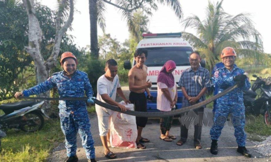 ANGGOTA APM Miri berjaya menangkap ular tedung selar sepanjang lima meter yang menceroboh kediaman penduduk di kampung Siwak Jaya, Bakam, petang semalam. FOTO Erika George