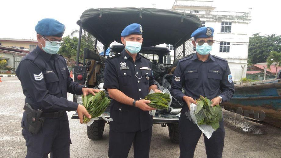 MOHIDIN (tengah) menunjukkan daun ketum yang dirampas dari dalam sebuah bot di Pulau Ular di sini tengah malam tadi yang dianggarkan bernilai RM17,500. FOTO Siti Rohana Idris