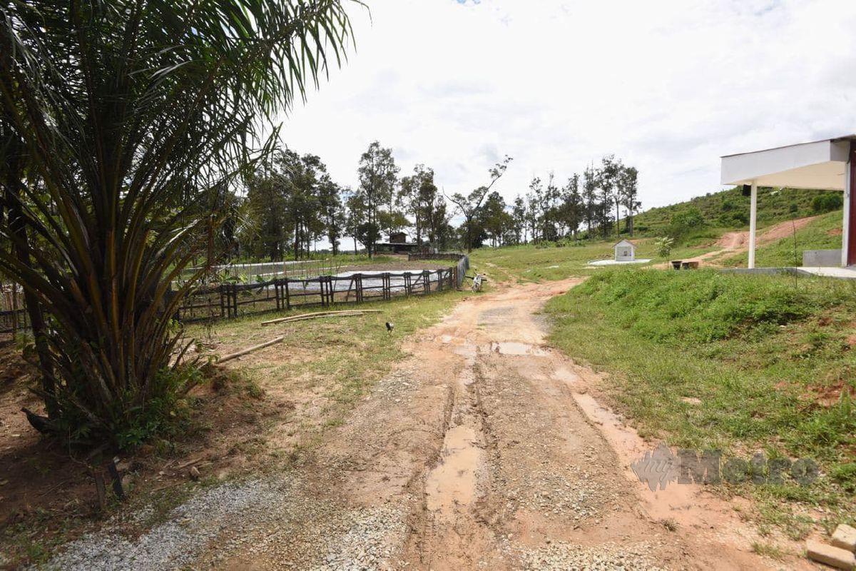 PREMIS tanaman sayuran yang dipercayai membuat sambungan air secara tidak sah yang diambil dari Kolam Pengurusan Air Selangor pada Operasi Penguatkuasaan mengejut SPAN di Rasa. FOTO Halimaton Saadiah Sulaiman