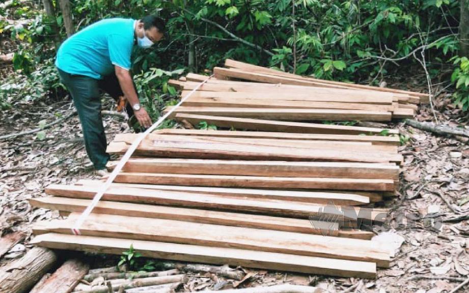 KAKITANGAN Pejabat Hutan Daerah (PHD) Temerloh dan Bera bersama kayu bergergaji yang ditemui dalam Hutan Simpan Chini. FOTO Mohd Rafi Mamat