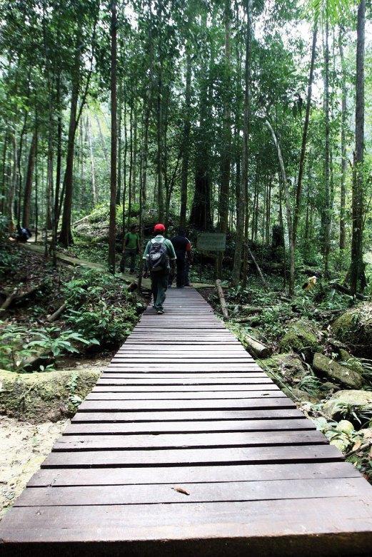 HUTAN Lipur Chemerong dengan jenis hutan dipterokarp  bukit  memaparkan landskap menarik.