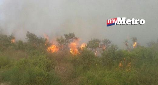 Padang rumput milik Besut Setiu Agropolitan (BSA) dekat Permaisuri yang terbakar petang tadi. - Gambar MOHAMMAD ISHAK