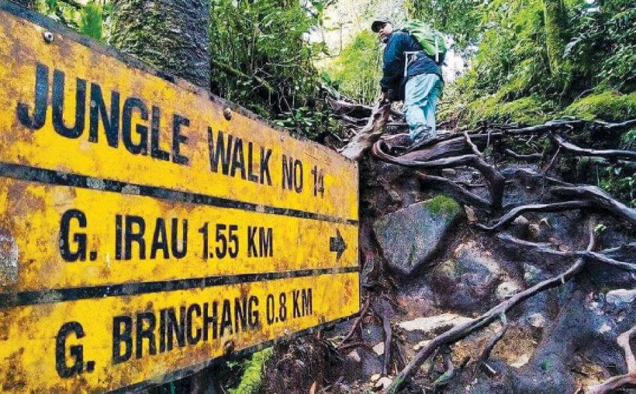LALUAN hutan berakar, tanah lembap dan berlumut perlu ditempuh pendaki sebelum sampai ke puncak Gunung Brinchang dan Gunung Irau.
