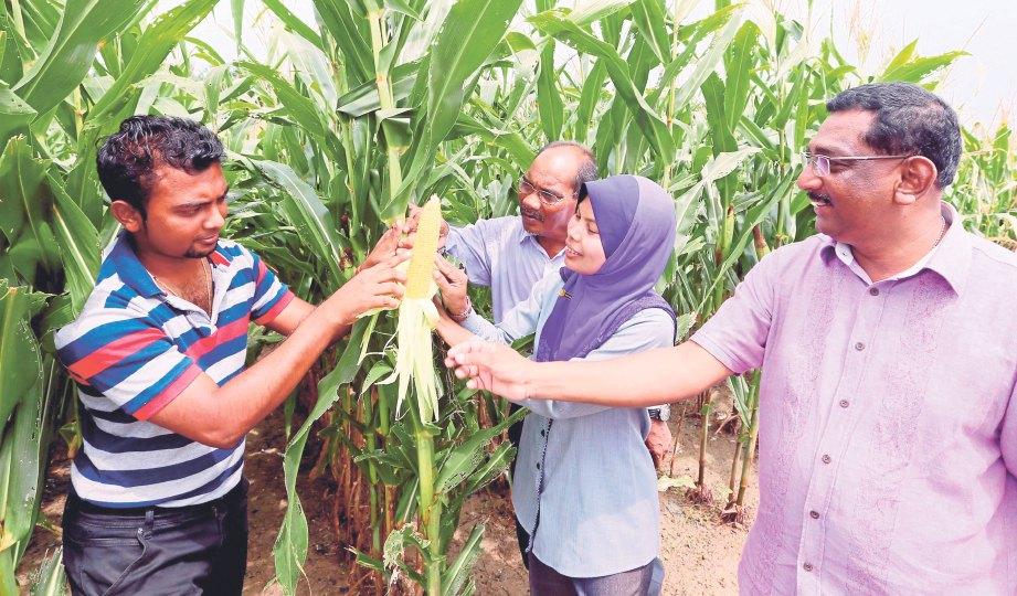 JAGUNG bijian antara sumber kekayaan baru negara dalam pembangunan industri makanan ternakan di negara ini.