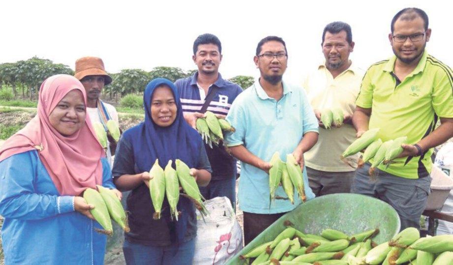 NOR Hotijah (tiga dari kiri) bersama Siti Ruhaida (kiri), Shaffie (lima dari kiri) dan peserta TKPM Titi Gantong menunjukkan jagung manis keluaran TKPM.