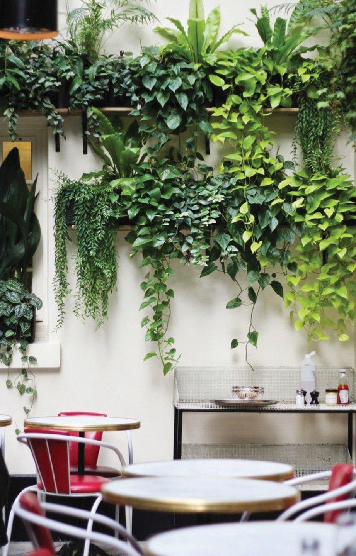 TERDAPAT pelbagai jenis pokok hiasan yang boleh ditaman dalam rumah.