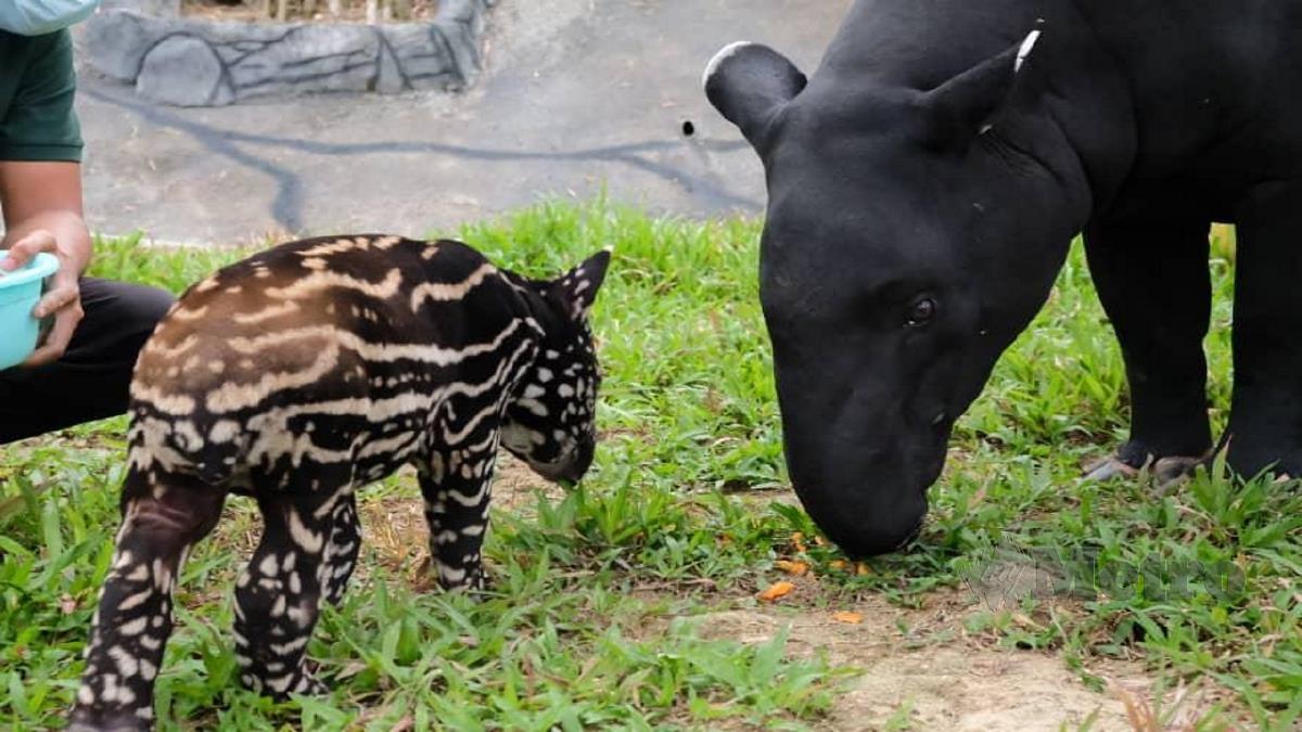 Puan Peradong dan anaknya yang baru dilahirkan. FOTO ihsan pembaca