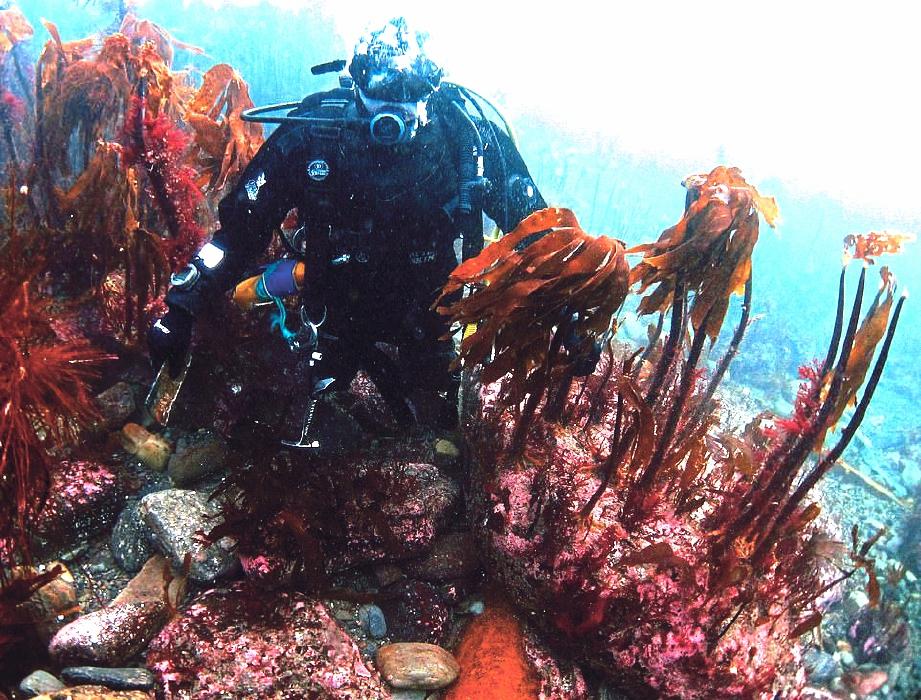 LOKASI bangkai itu ditemui ditumbuhi rumpai laut yang menakjubkan. FOTO Agensi