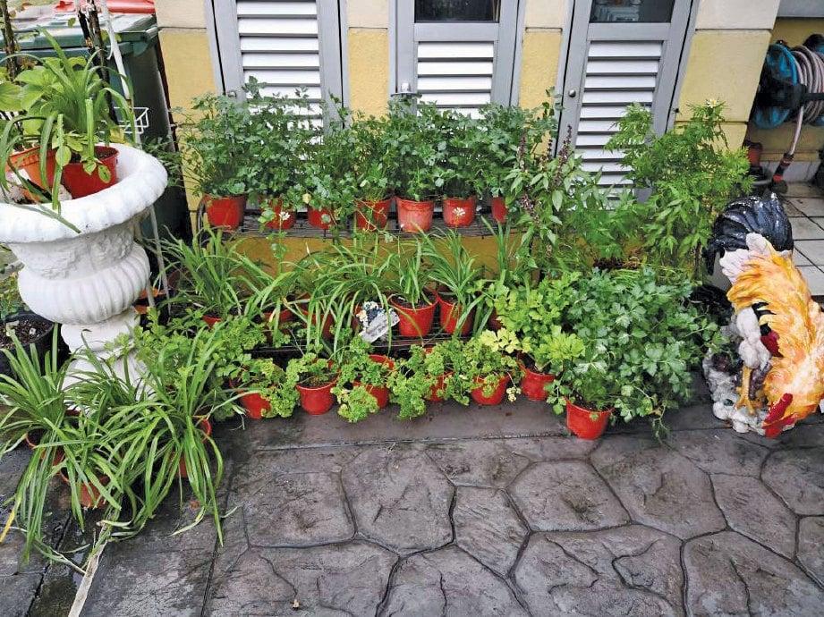 ANTARA tanaman herba yang digunakan untuk memasak.