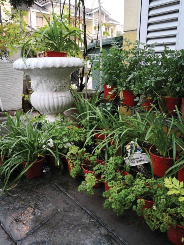 NORSAHIDA bijak menggunakan ruang terhad di halaman rumah dengan pelbagai tanaman.