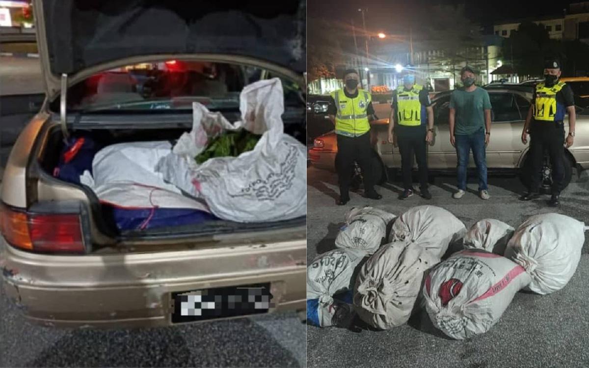 Pihak polis menjumpai dan merampas tujuh guni disyaki daun ketum di dalam sebuah kereta dekat Hentian Rehat dan Rawat (R&R) Behrang, Lebuh Raya Utara Selatan (PLUS) arah selatan kira-kira jam 11.00 malam, kemalrin. FOTO IHSAN PDRM