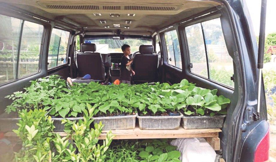 Anak Pokok Turut Dijual Bagi Menambah Pendapatan