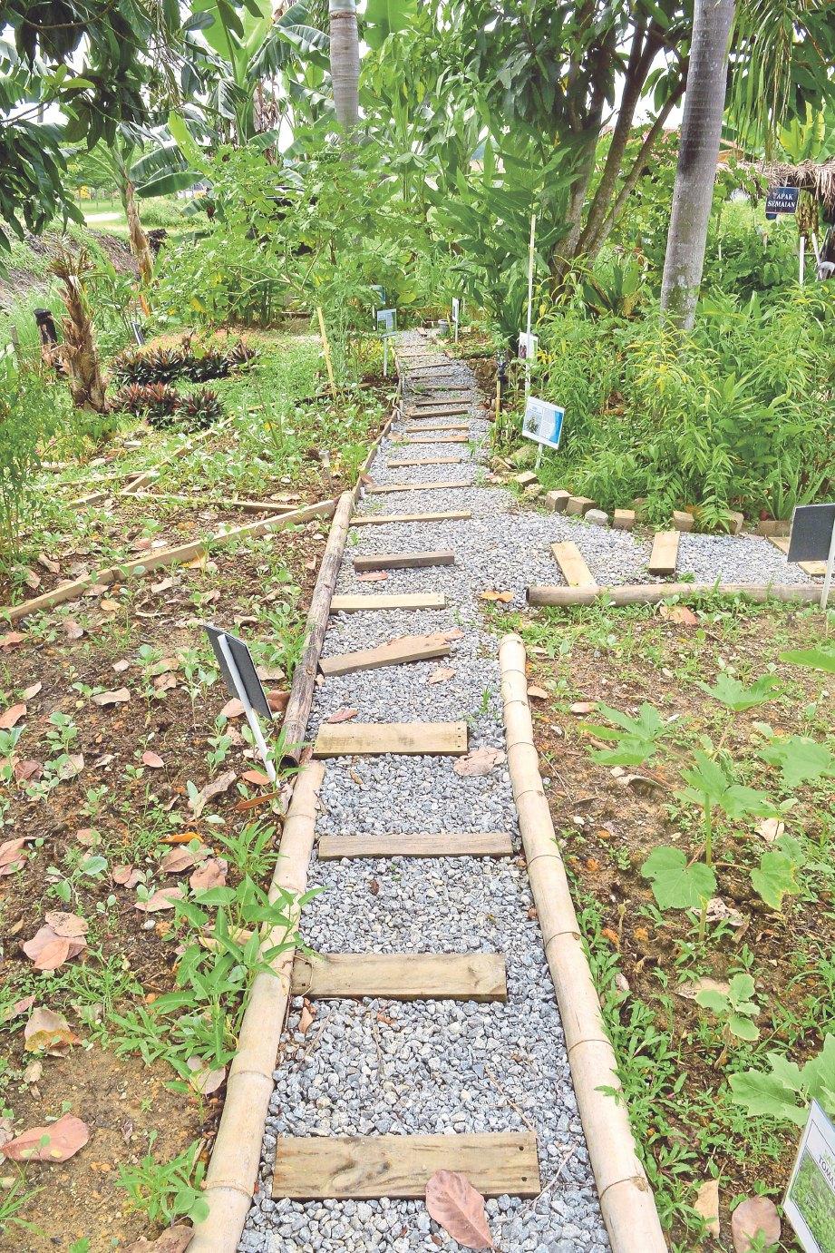 LAMAN herba diperindahkan dengan laluan pejalan kaki daripada kerikil dan buluh.
