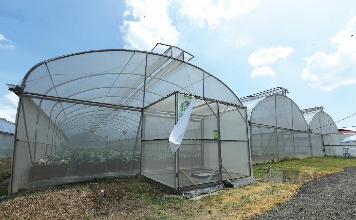 TEKNOLOGI Pengeluaran Kubis Bunga Tanah Rendah menggunakan kaedah fertigasi bawah struktur pelindung hujan (SPH) .