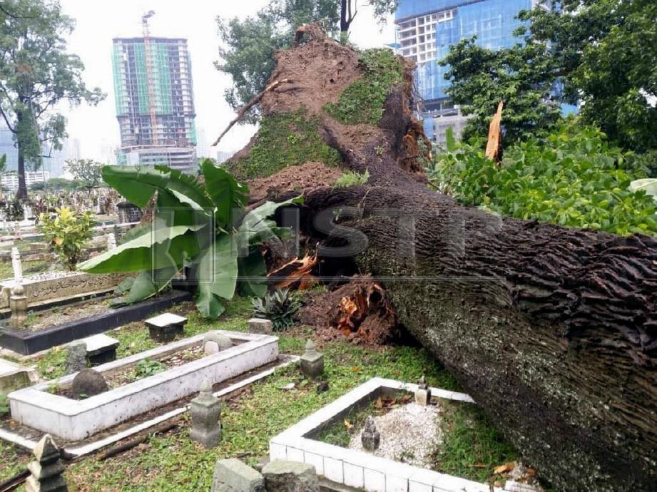 POKOK tumbang di Tanah Perkuburan Islam Jalan Ampang. FOTO Ihsan DBKL