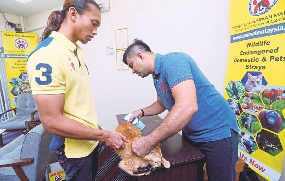 HAIWAN gelandangan yang ditangkap akan dirawat sebelum ditawarkan dalam program keluarga angkat.