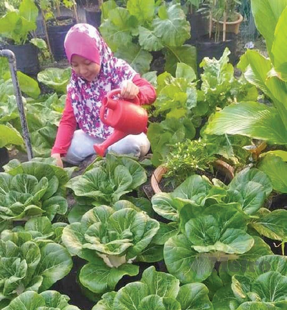 MENDAPAT bantuan anak bagi menyiram tanaman sayur-sayuran.
