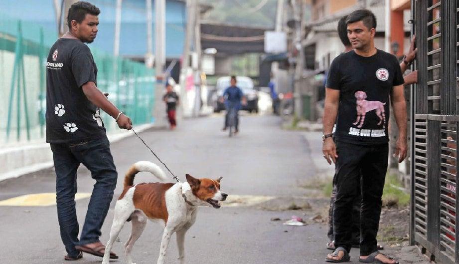 HAIWAN terbiar seperti anjing yang dilaporkan mengganggu penduduk ditangkap sebelum dibawa ke tempat perlindungan Animal Malaysia.