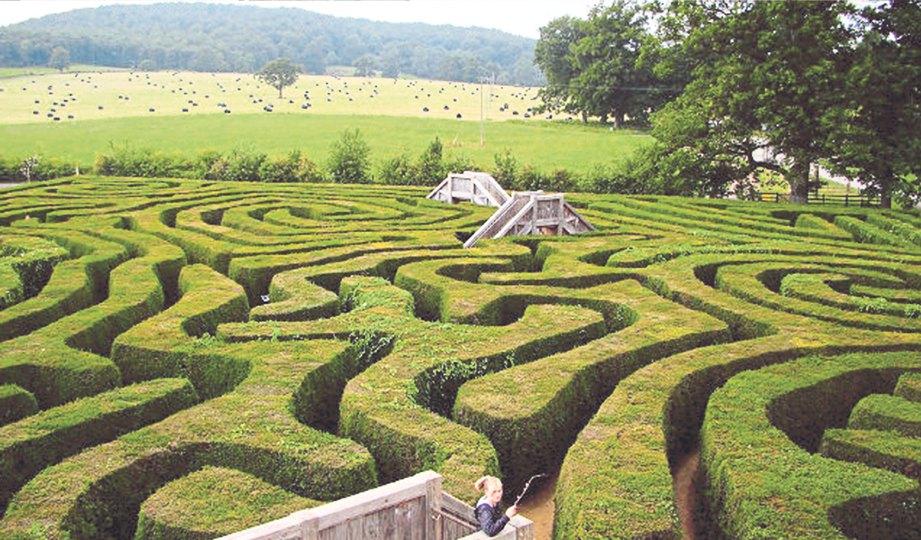 BENTUK pagar sesat Longleat Hedges Maze di England.