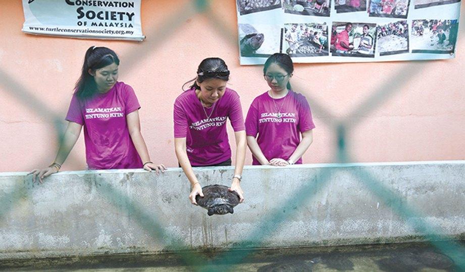 CHEN melepaskan tuntung di Pusat Penetasan Tuntung, Kampung Pasir Gajah.